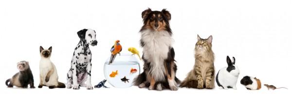 Northern VA Pet Resources